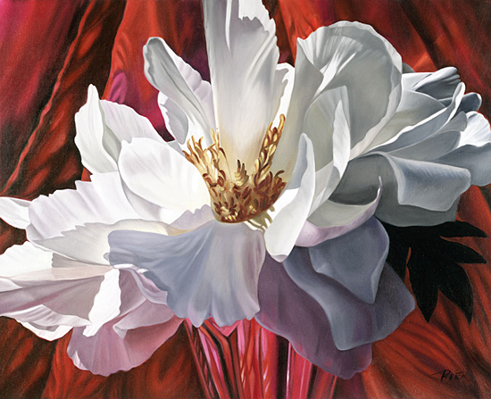 White Peony on Red - Giclee Print - by Barbara Buer