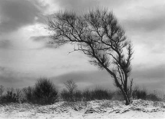 Bending Tree - Black & White Photograph - by Joseph Hyde