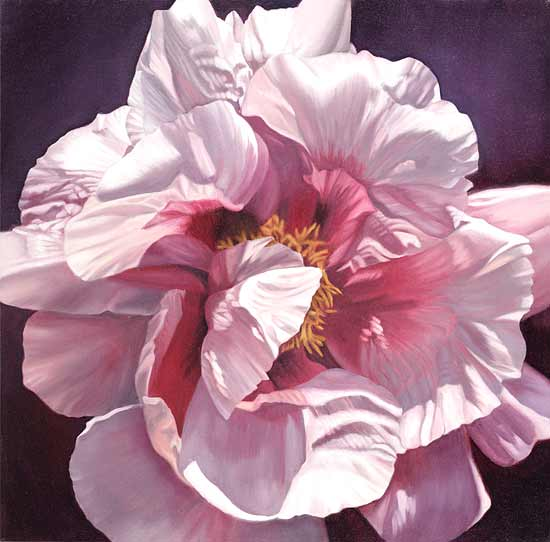 Single Pink Peony - Giclee Print - by Barbara Buer