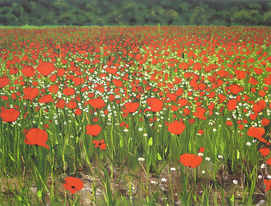 Poppies Provence - Giclee Print - by Laurie Regan Chase