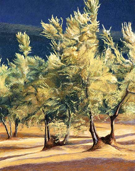 Olive Trees in Italy - Giclée Print - by Helen Vaughn