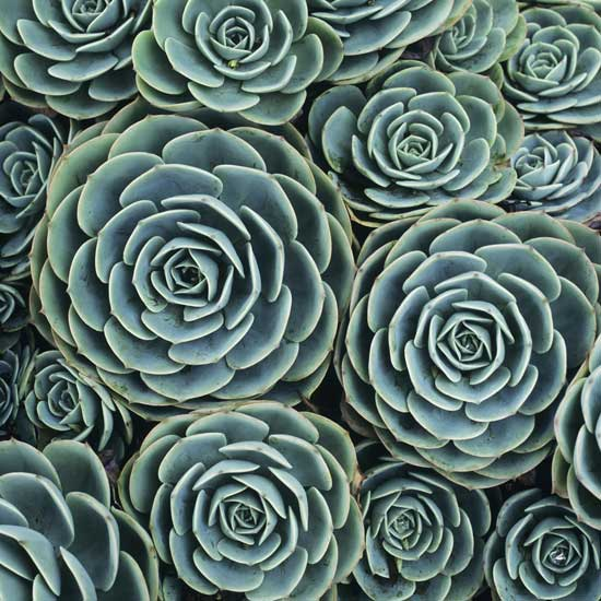 Hen & Chicks - Color Photograph - by Adrienne Adam