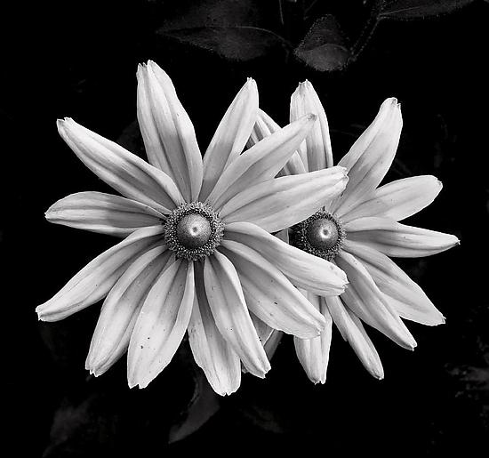 Monochromatic Flowers No.2 - Black & White Photograph - by Mike Cable