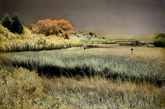 The Creek - Infrared, Hand Painted Photograph - by Elizabeth Holmes