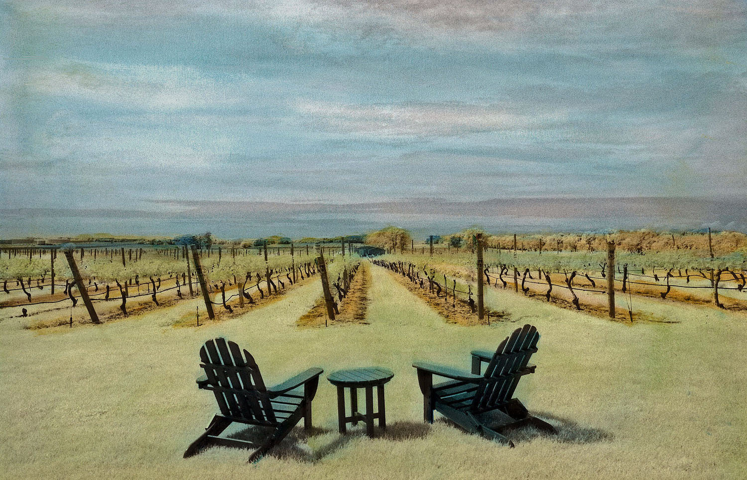 Vineyard in Summer - Infrared, Hand Painted Photograph - by Elizabeth Holmes