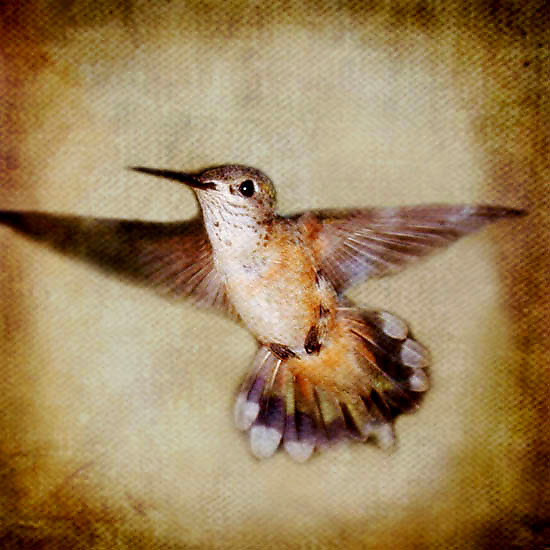 Song of a Rufous Hummingbird I - Color Photograph - by Yuko Ishii